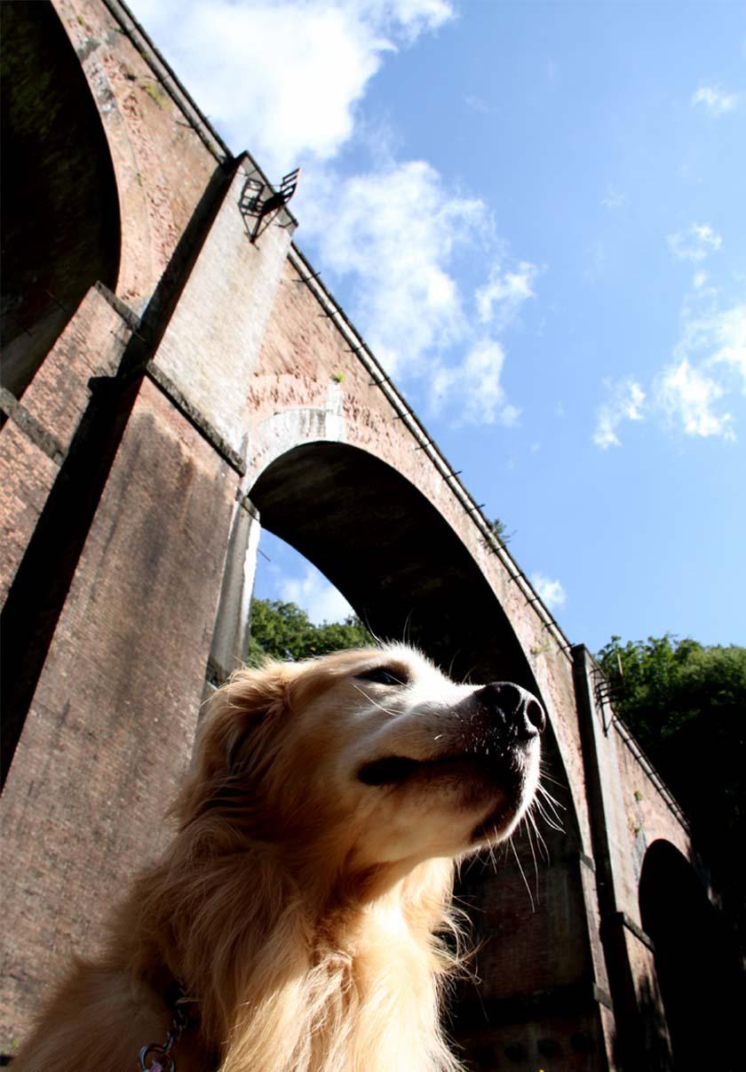 浅間山系捜索犬の旅(1)