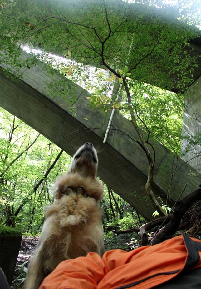 浅間山系捜索犬の旅(8)