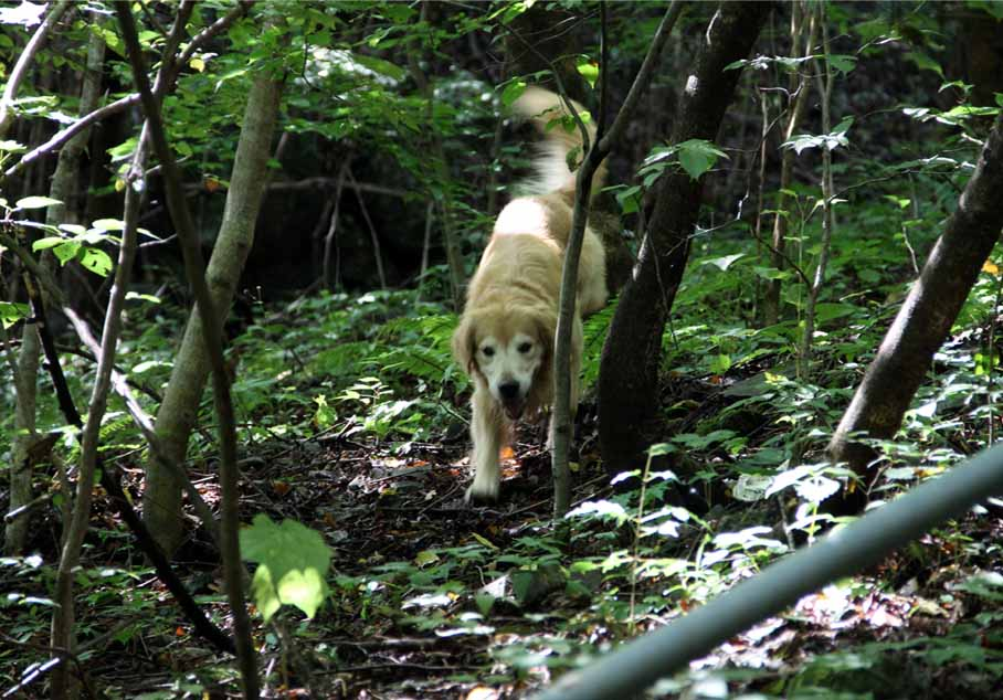 浅間山系捜索犬の旅(12)