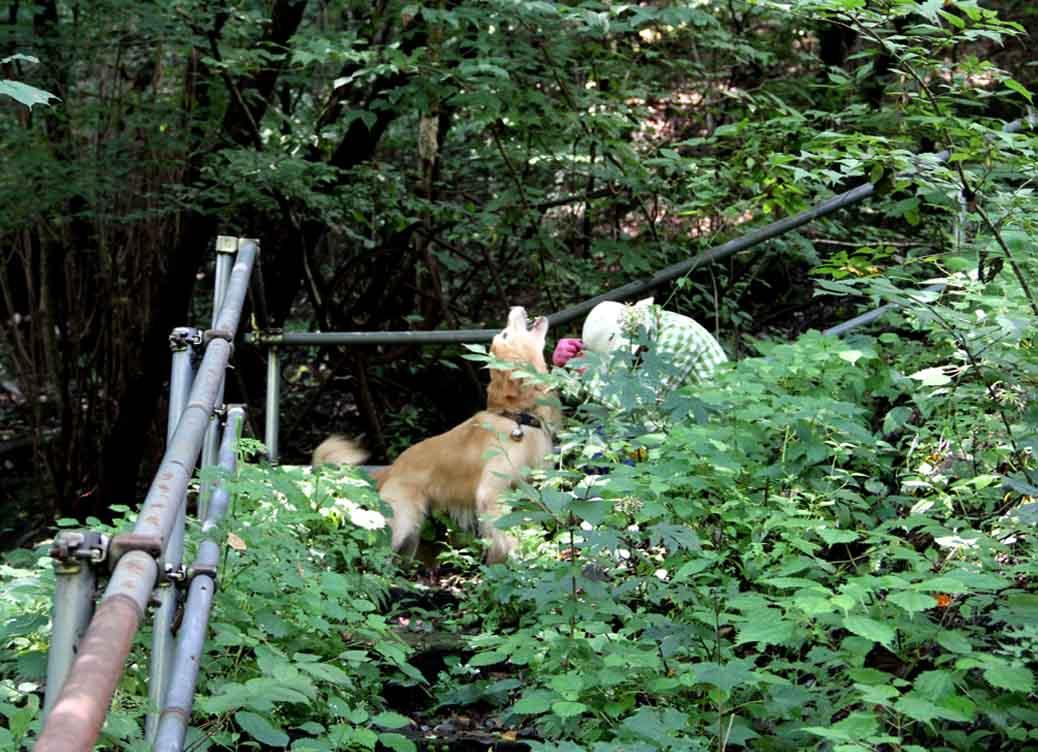 浅間山系捜索犬の旅(13)