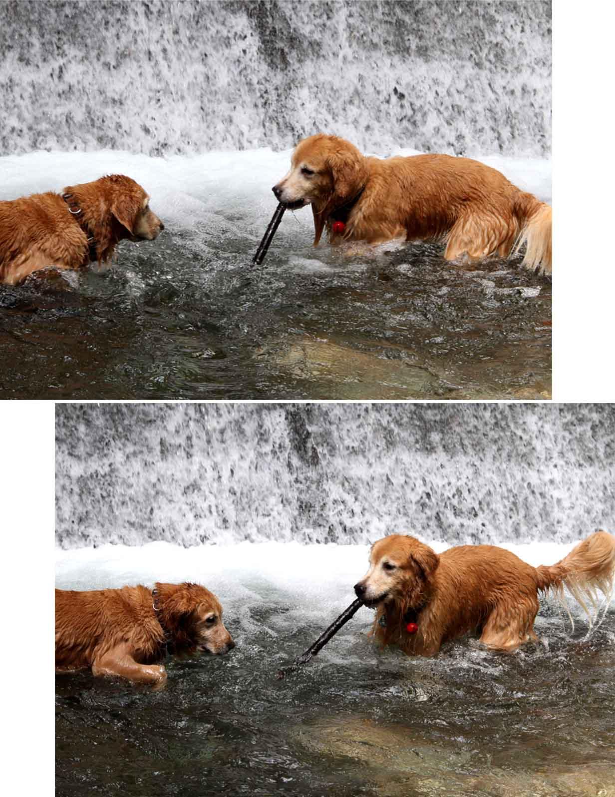 浅間山系捜索犬の旅(16)