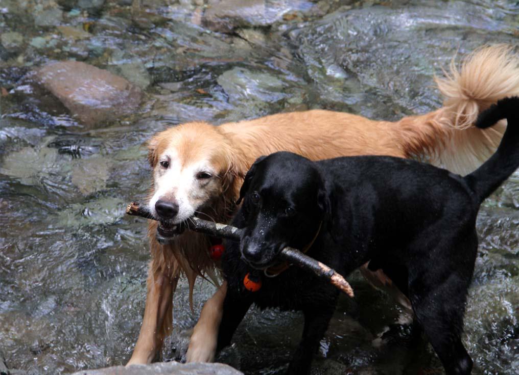 浅間山系捜索犬の旅(17)