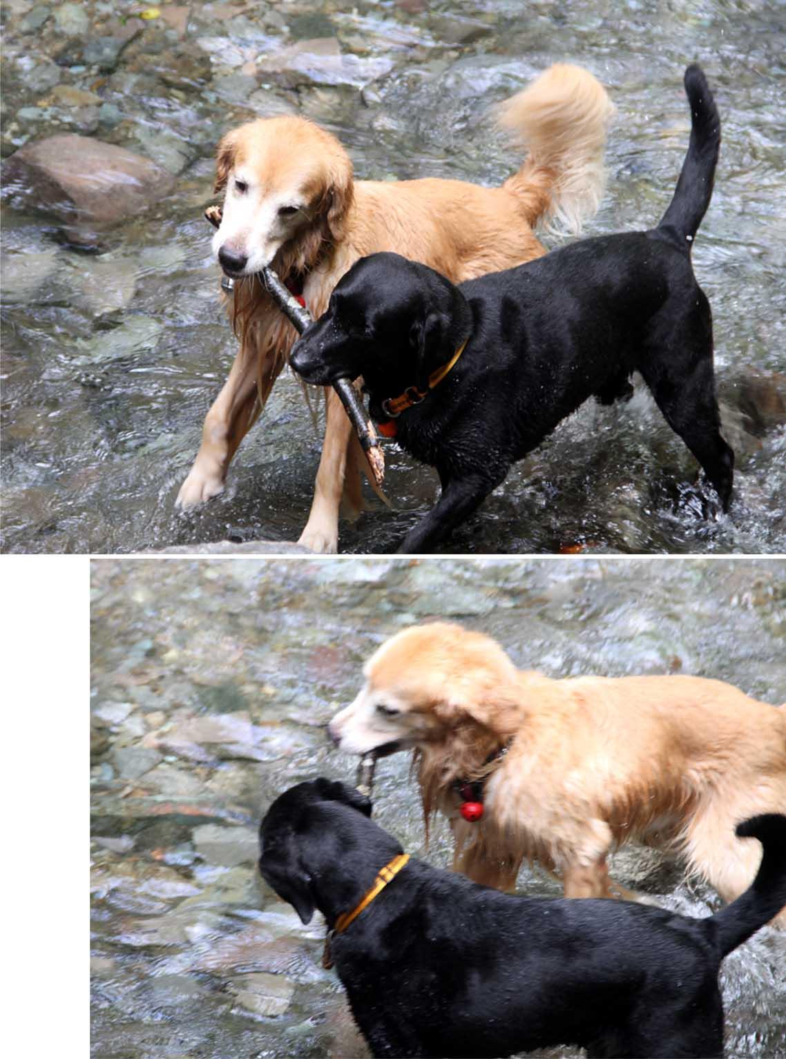 浅間山系捜索犬の旅(18)