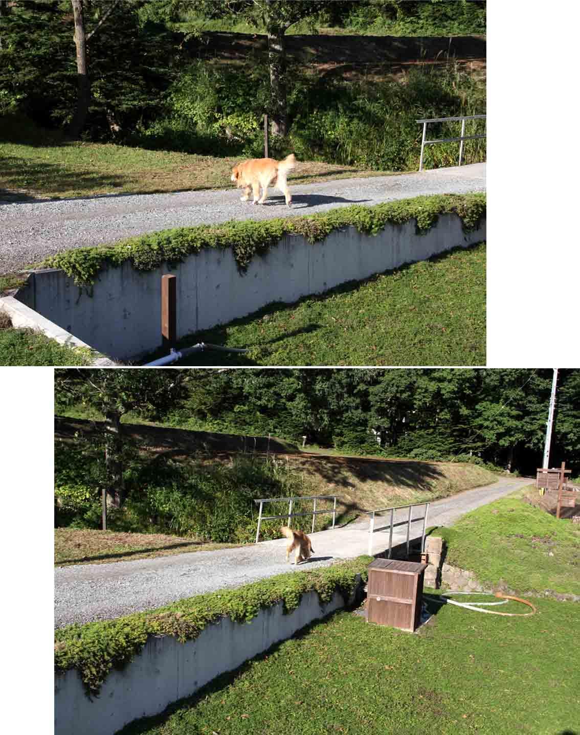 浅間山系捜索犬の旅(34)