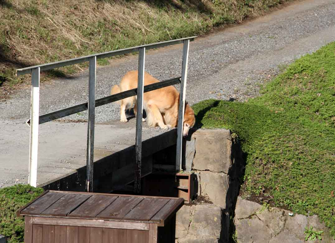 浅間山系捜索犬の旅(38)