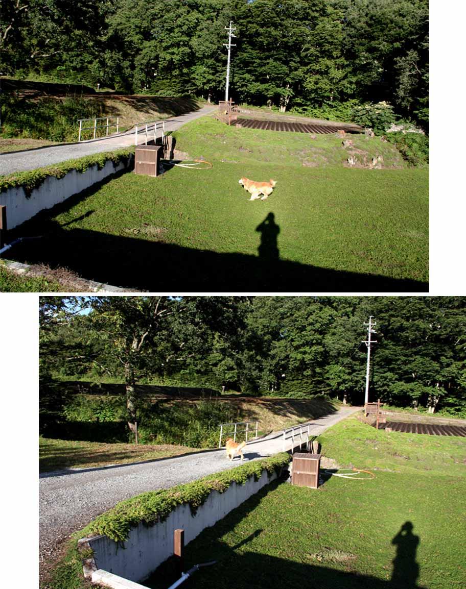 浅間山系捜索犬の旅(52)
