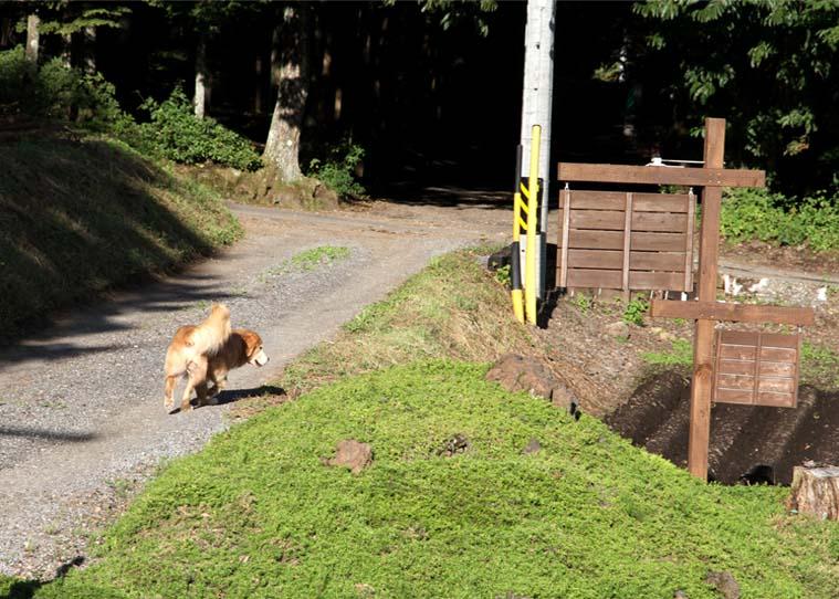 浅間山系捜索犬の旅(53)