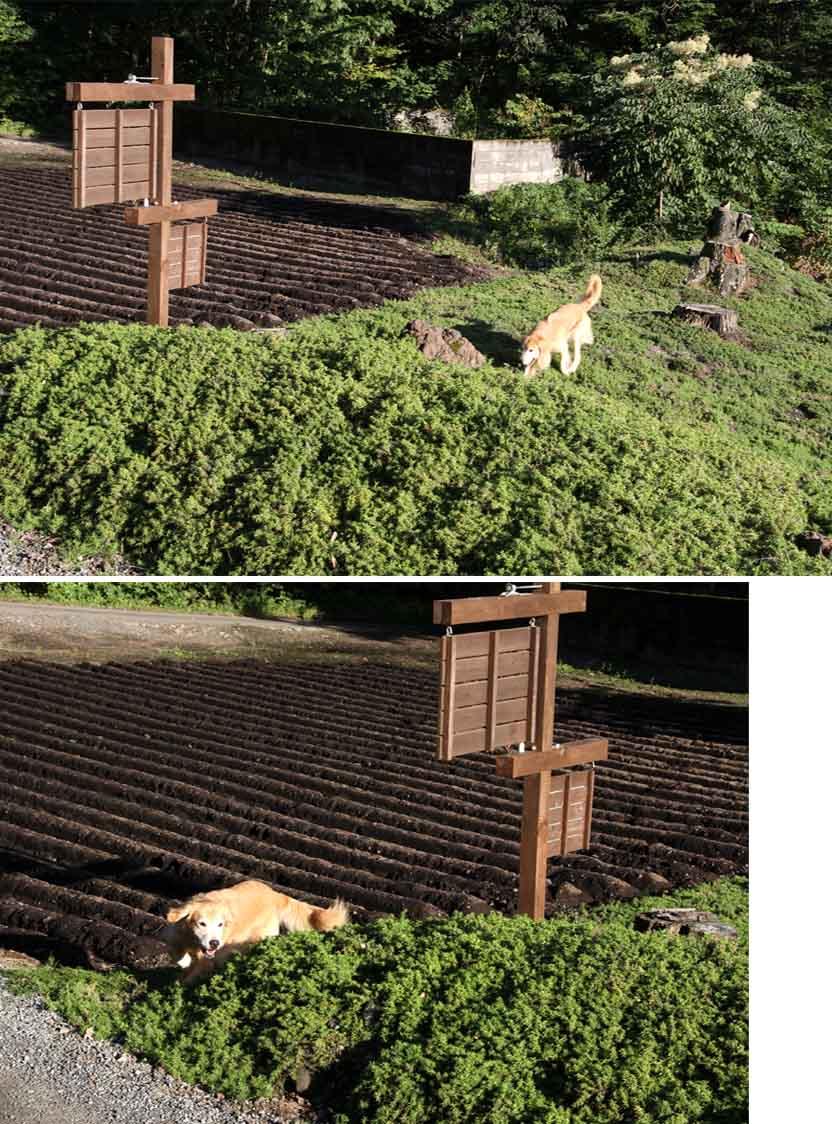 浅間山系捜索犬の旅(55)