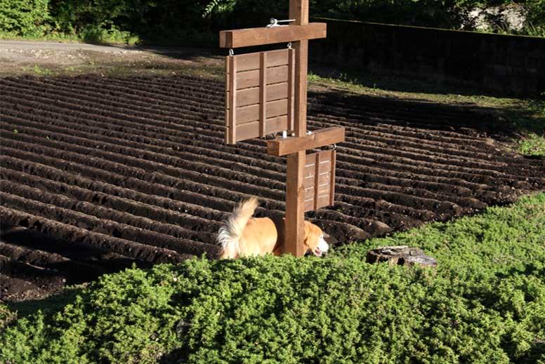 浅間山系捜索犬の旅(56)