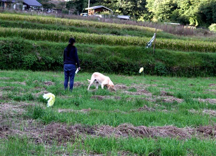 浅間山系捜索犬の旅(59)