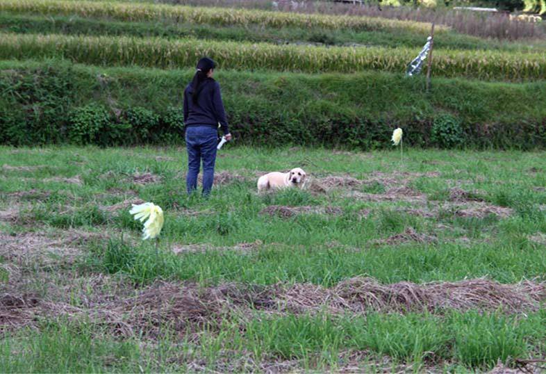 浅間山系捜索犬の旅(60)