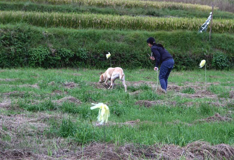 浅間山系捜索犬の旅(61)