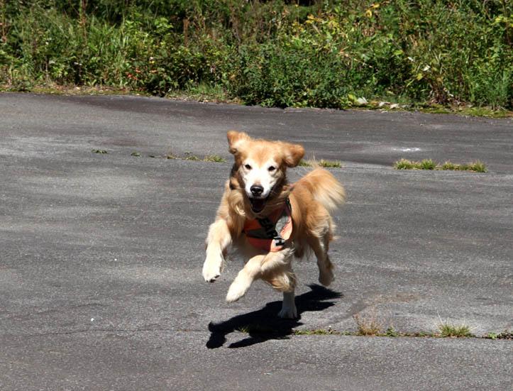 浅間山系捜索犬の旅(72)
