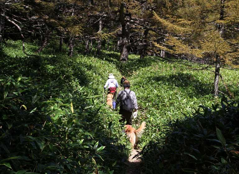浅間山系捜索犬の旅(83)