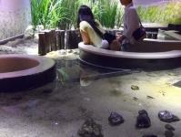 仙台うみの杜水族館11干潟