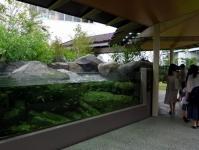 仙台うみの杜水族館12広瀬川