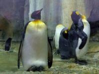仙台うみの杜水族館20ペンギン