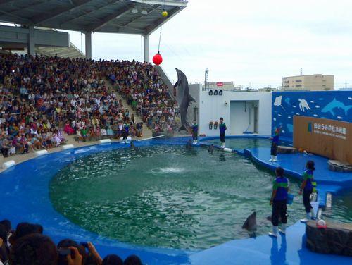 仙台うみの杜水族館22イルカアシカパフォーマンス