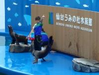 仙台うみの杜水族館23イルカアシカパフォーマンス