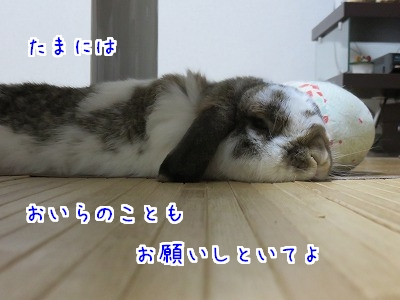 IMG_1147.jpg