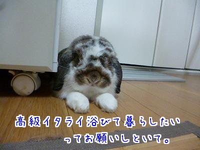 P1150591.jpg