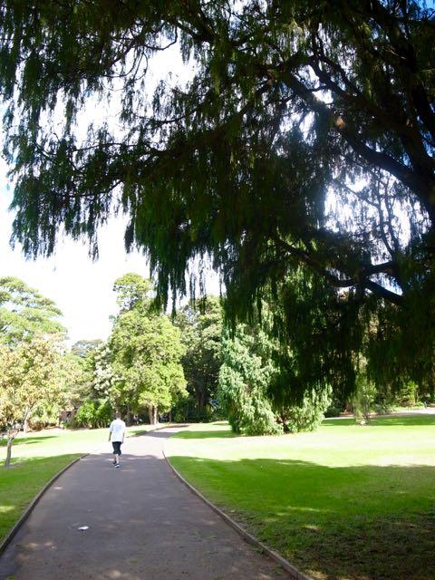 シドニー 王立植物園 - 1 (1)