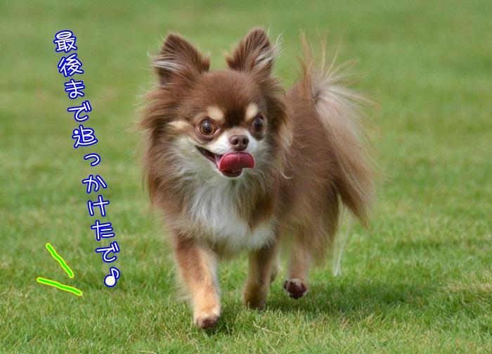 DSC_3549_20150923154636f41.jpg