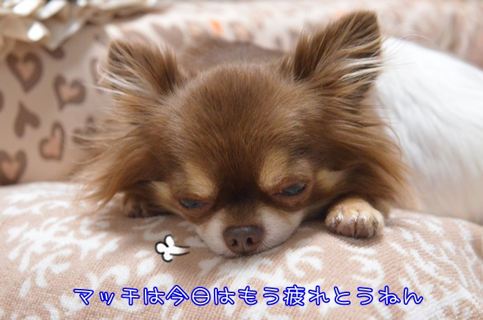 DSC_3971_2015101020181199a.jpg