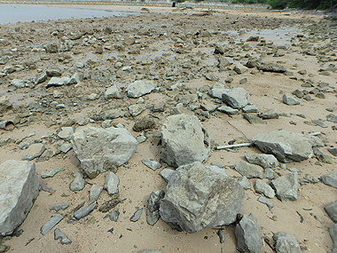 干潟転石帯