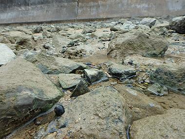 大岩ゴロゴロ