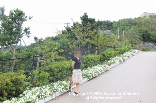 jiawa-0831-6535.jpg