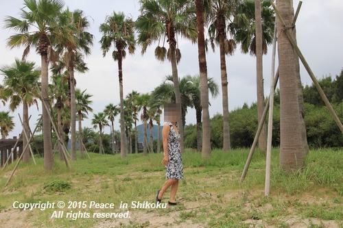 jiawa-0831-6655.jpg