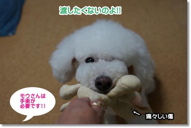 モウさんピンチ!!