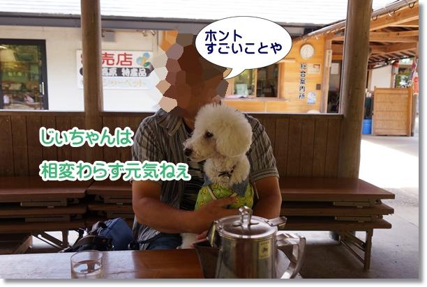 じぃちゃんと ふるさと旅行村3
