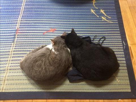 ビビ & ルフィー