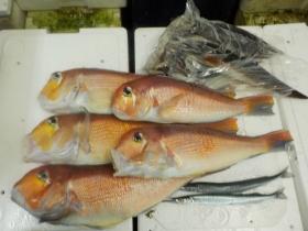 9鮮魚セット2015831