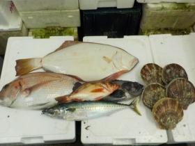 10鮮魚セット2015831