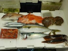 2鮮魚セット201592