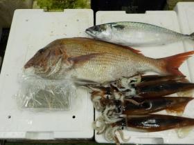 3鮮魚セット201592