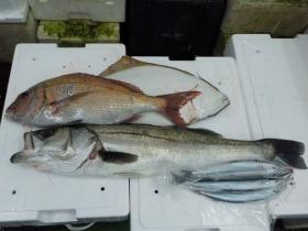 4鮮魚セット201592