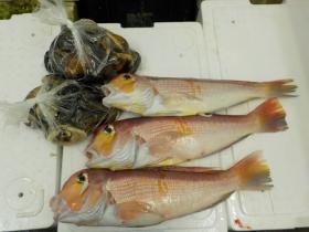 8鮮魚セット201593
