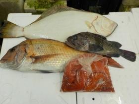 2鮮魚セット201595
