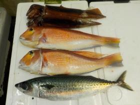 2鮮魚セット2015915