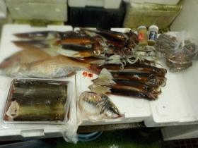 7鮮魚セット2015915