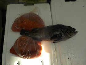 1鮮魚セット2015916