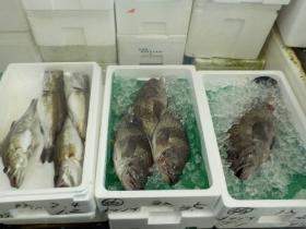 6鮮魚セット2015916
