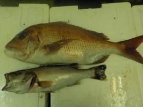 12鮮魚セット2015916