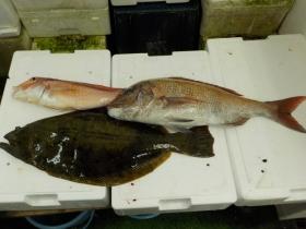 2鮮魚セット2015924