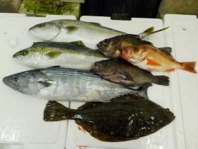 3鮮魚セット2015924