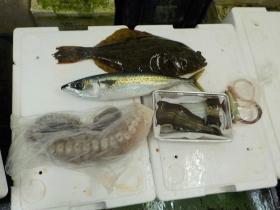 10鮮魚セット2015924